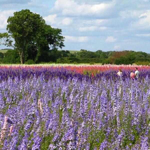 'The Real Flower Petal Confetti Company' Flower Field Is Open