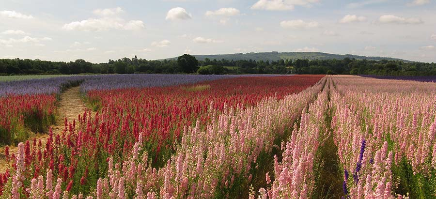 Confetti Field In Worcestershire