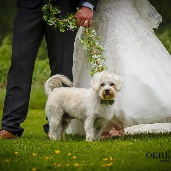 Dog With Bow Tie At A Wedding - Oehlers Photography | Nottingham Wedding Photographer